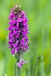 Orchids portfolio