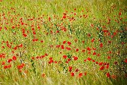 Vercors Flowers portfolio