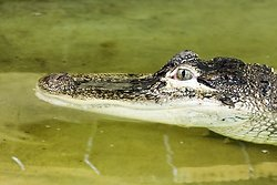 Crocodiles of the World portfolio