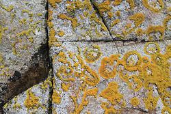 Carna Granite & Lichen