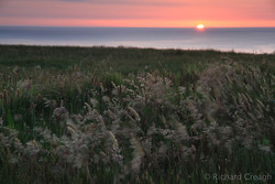 Sunset, Grasses