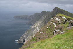 Achill Sea Cliffs