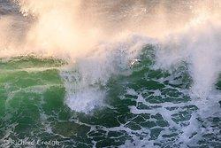Gannet & Wave