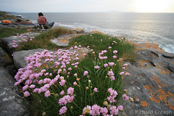Sea Thrift Belay