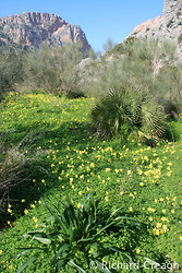 Winter Meadow, El Chorro