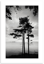 04140503 - Marble Bay Pine Forest
