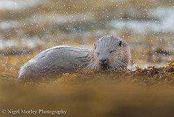 Otters portfolio