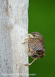Birds of Our Gardens, Woodland and Marshes portfolio