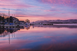 Pink Waterhead