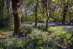 A Field of Blue
