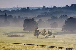 Cawthorne Mist