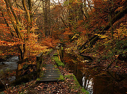 Healey Dell in Autumn