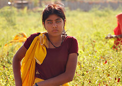 Beautiful chilly picker, Chatra Sagar - Rajasthan