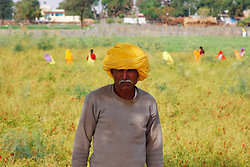 Chillie Farmer Chatra Sagar, Rajasthan