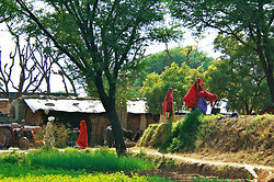 Farm on road to Samode Rajasthan-2