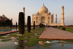 The Taj Mahal  & herons
