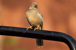Bird at Ranthambore, Rajasthan