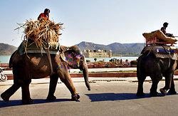 Elephants opposite the Jal Mahal Man Sagar Lake Jaipur