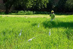 Chatra Sagar farmer with herons
