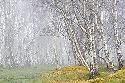 Woodland portfolio