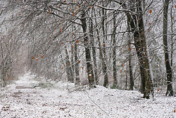 Chawton Park woods in the snow