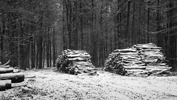 Snow covered log piles