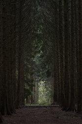 Tall dark forest