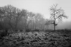 Mono Mist Trees portfolio
