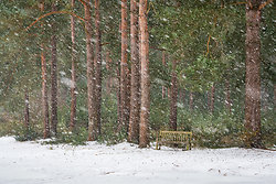 Bench in a snowstorm