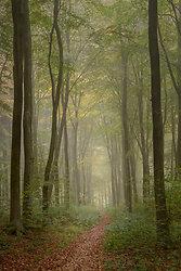 Path through Itchen wo...