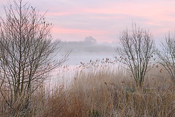 Dawn on the river bank