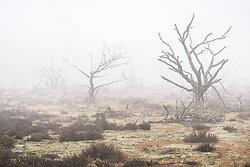 Charred Mist portfolio