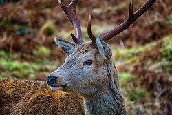 wildlife portfolio