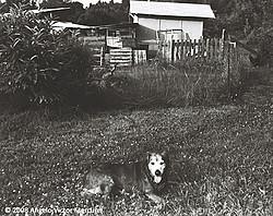 Pets and People portfolio