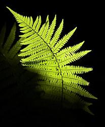 Flora portfolio