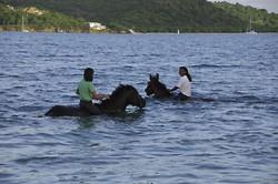Swim on Horseback portfolio