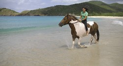 White Sandy Beaches portfolio