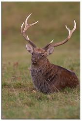 British wildlife portfolio