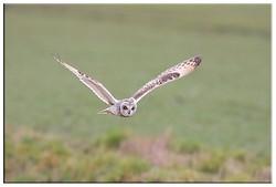 Owls portfolio