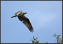 Birds of Costa Rica portfolio