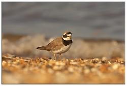 Coastal and Wading Birds portfolio
