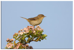 Common and Countryside Birds portfolio