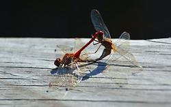 Insects portfolio