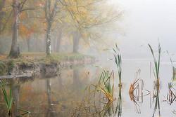 Donadea Fog