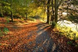 Glending Wood