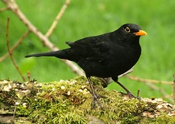 Other Birds portfolio