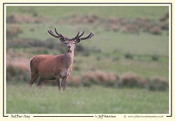 Red Deer portfolio