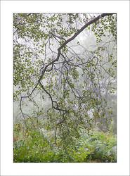 Sherwood Forest portfolio