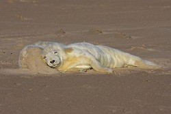 Seals portfolio