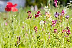 Plants (Flora) portfolio